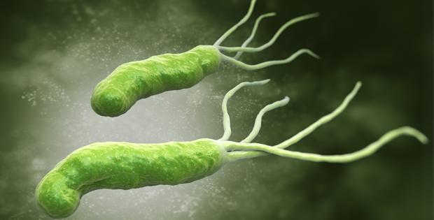 vi khuẩn hp chữa khỏi không