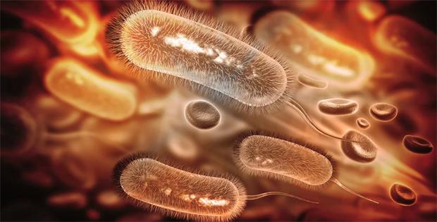 vi khuẩn hp dương tính