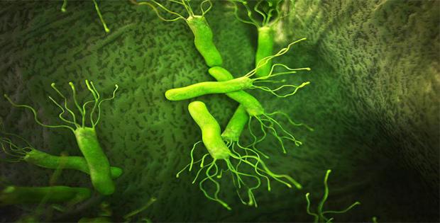 vi khuẩn hp sống được bao lâu